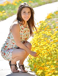 Stacey Spring Flowers